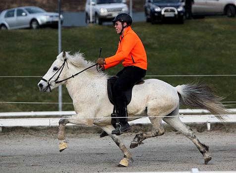 ijslandse paarden oirschot
